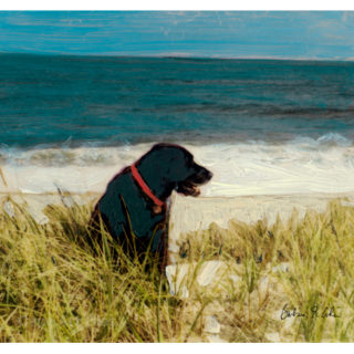 2-dog in the dunes