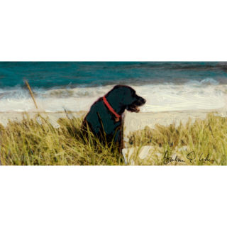 dog in the dunes key
