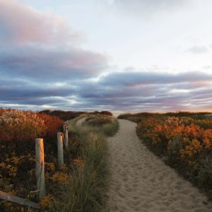 Autumn Dune Path Coasters